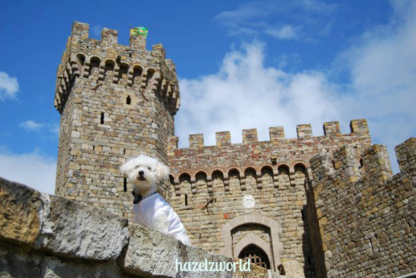a castle in wine country that is dog friendly